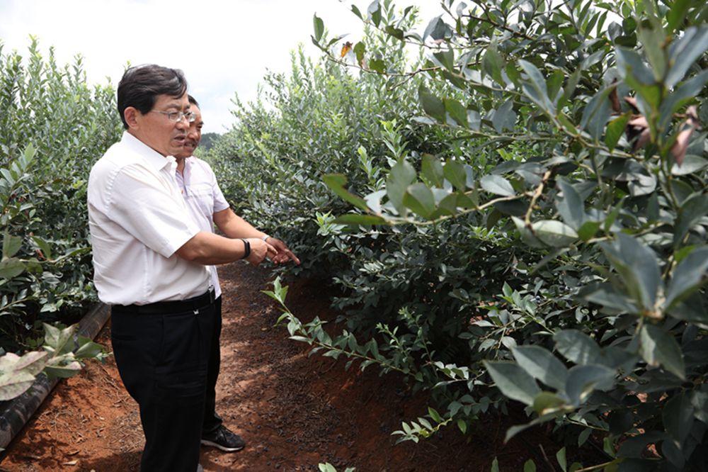赵安升到楚雄市调研指导脱贫攻坚产业和企业发展工作